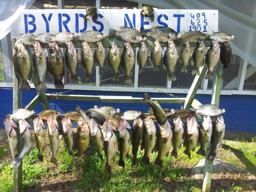 perch bass and frogs